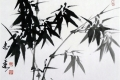 The Bamboo with Dewdrops